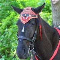 конь :: Laryan1