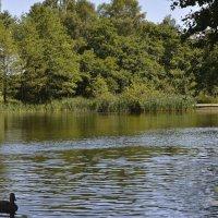 Озеро :: Анастасия Меркулова