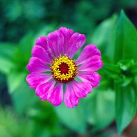 цветок :: Арсений Корицкий