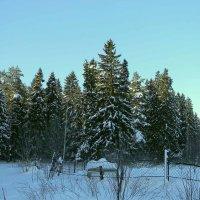 Змний лес :: Алексей Денисов