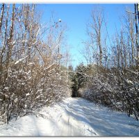 Зимушка,зима... :: Тамара (st.tamara)