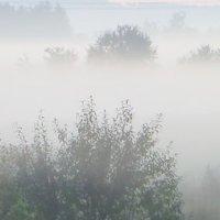 Утро в тумане :: Юрий Цыплятников