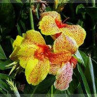 Цветы из жаркого лета Фото 2 :: Владимир Бровко