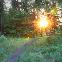 Подмосковный лес :: Юрий Кольцов