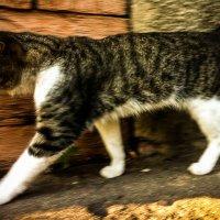Кот в деревне :: Константин Родочинский