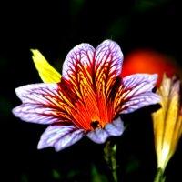 Цветок :: Натали V