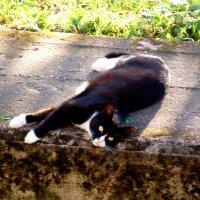 Многоцветная кошка :: Фотогруппа Весна.