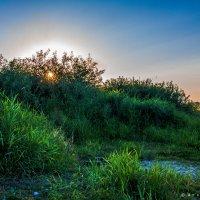 Краски лета :: Игорь Вишняков