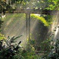 Вода и солнце :: Alexander Andronik
