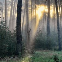 И всё же побеждает солнце... :: Лесо-Вед (Баранов)