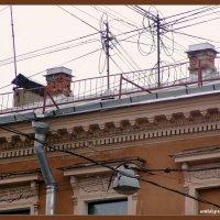 Крыши Петербурга :: vadim