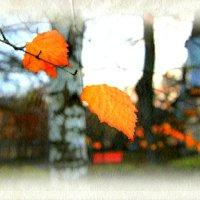 Осенние листья... :: Нина Шоломицкая