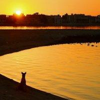Собака встречает закат. :: Виктор Евстратов