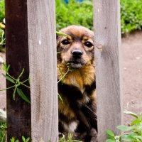 Собака-друг человека :: Ирина Федоренко