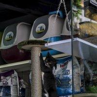 Дети зоомагазина-из серии кошки очарование моё! :: Shmual Hava Retro