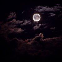 Волшебная ночь Луны :: Анастасия Аникеенко