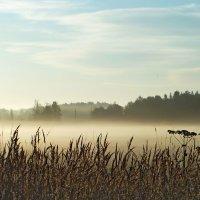 Рассветные травы :: Юрий Цыплятников