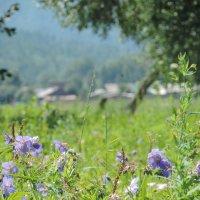 Летние цветы :: Ася Довгополая