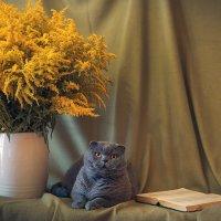 Кот учёный :: Romanchuk Foto