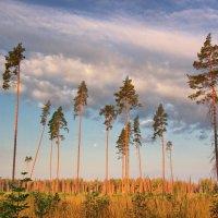 Здесь был лес! :: Юрий Кольцов