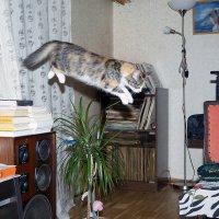 Летучая кошь :: Сергей Кириллович Виноградов