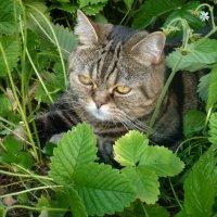 В засаде.... охотник за  бабочками... :: Galina Leskova