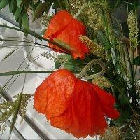 Маков цвет... :: Нина Корешкова