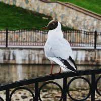чайка :: Arina Salyamova