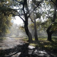Утро в лесу :: Николай Алехин