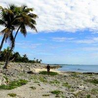 Коралловый берег Карибского моря :: Елена Шемякина
