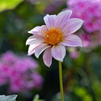 Тот же летний сад :) :: Маry ...