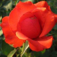 Дивная красавица... :: Тамара (st.tamara)