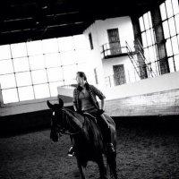 Horse :: Roman GreenBear