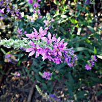 цветы :: Татьяна Королёва