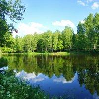 Английский пруд в Петергофе :: Людмила Тамкун