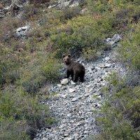 Медведь :: Dmitriy Sagurov