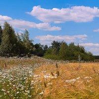 Жаркое лето 14 года :: Александр Лебедев