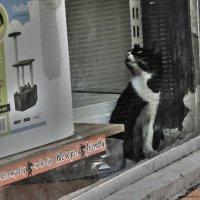Мечты- из серии кошки очарование моё! :: Shmual Hava Retro