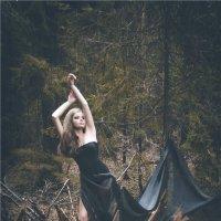 Темный лес :: Юлия Ивлин