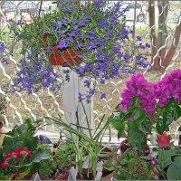 Весна на моём окне :: Людмила Ардабьева