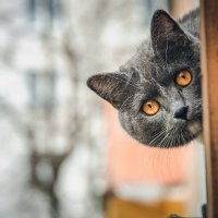 Соседский котик :: Виктория Ходаницкая