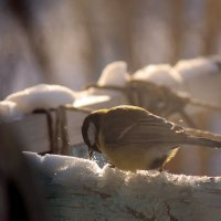 Последний снег февраля :: Владимир Марков