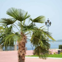 Пальма на Волге :: sarachai