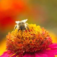 Из жизни насекомых :: Anton Lavrentiev