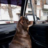 Чарли  ждет свою хозяйку . :: Виктор