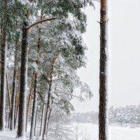 Немного зимы... :: Aleks