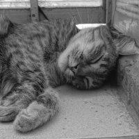 Лежу в теньке 2 :: Андрeй Владимир-Молодой