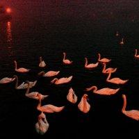 Сумерки, туман, лебединое озеро... :: Игорь Липинский