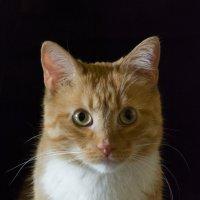 кошка :: Сергей Желтов