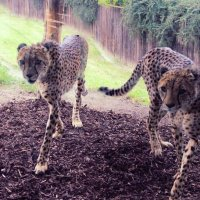 Zoo Praha :: Ulzhan Ibraeva